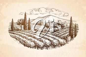 Hand drawn vineyard landscape on old paper background. Vintage style vector illustration.
