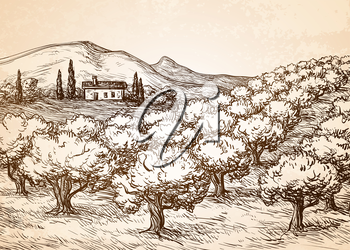 Hand drawn olive grove landscape on old paper background. Vintage style vector illustration.