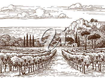Countryside scenery. Hand drawn vineyard landscape. Vintage style vector illustration.