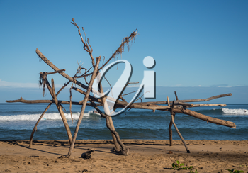 Driftwood structure on Hanalei beach with a surfer visible behind wood