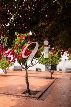 Cloisters and flowering trees in courtyard of Sao Vicente de Fora church in Alfama district