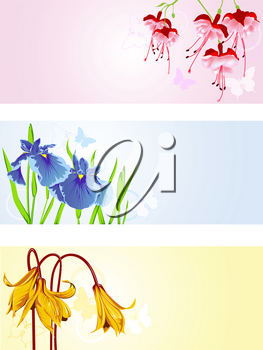 colored vector floral backgrounds