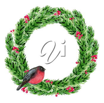 Hand drawn watercolor Christmas wreath. Green fir branches and bullfinch on a white background.