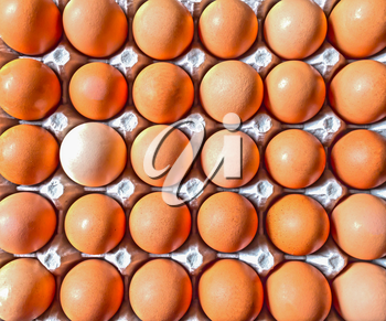 Close up of Raw Brown Eggs in Gray Container