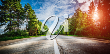 Sunrise beautiful road in forest. Summer landscape