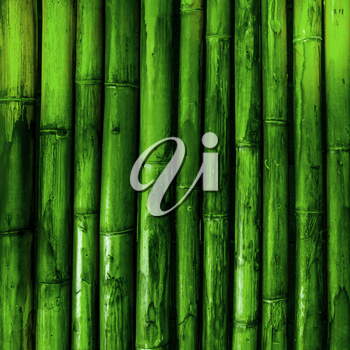 Bamboo texture. Green nature background tropical wood