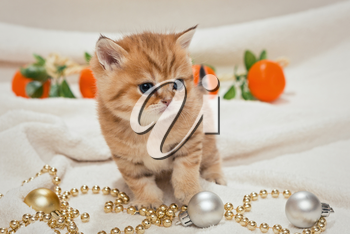 Small kitten and Christmas toys on a white blanket