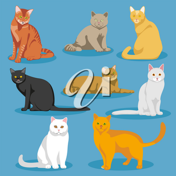 Cute cartoon kitties or cats vector set. Set of cats and cartoon illustration of domestic cat
