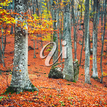 Beautiful autumn forest in the park with yellow and red trees