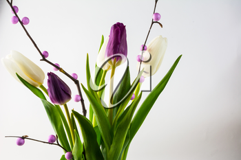 Fresh white and purple tulips bouquet. Flower frame. Flower background. Flower bouquet. Greeting card. Mothers day. Place for text. Copy space