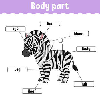 Body part. Learning words. Education developing worksheet. Activity page for study English. Game for children. Funny character. Isolated vector illustration. Cartoon style.